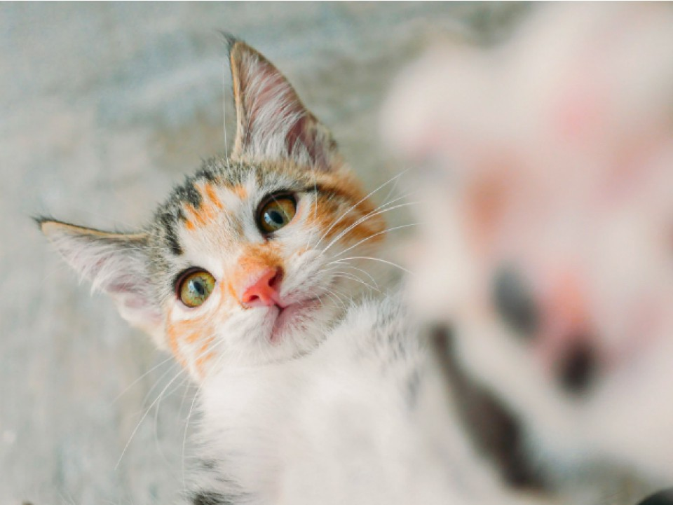 A close-up of a playful cat touching the camera