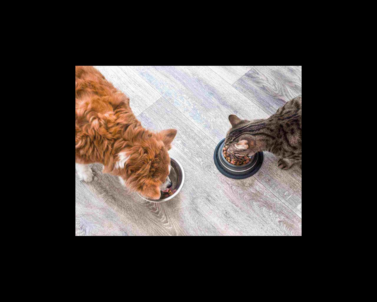 A dog and a cat eating from their food bowls