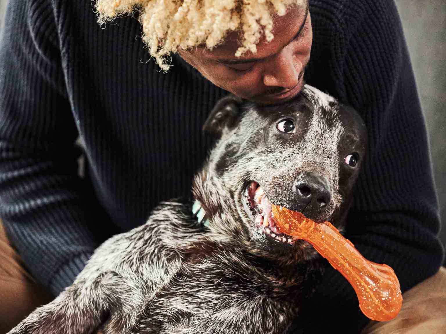 A dog owner kissing his dog, which is holding an orange toy